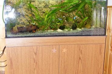Akvárium szekrény